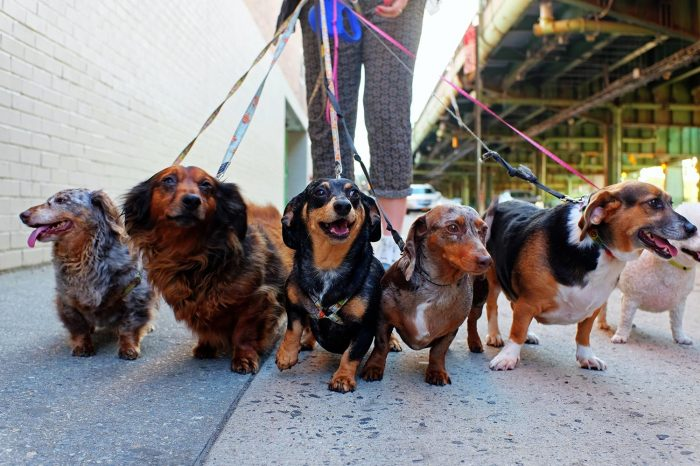 Embrace Debate: Could There Be A More Embarrassing Way To Die Than Death By Weiner Dog(s)?